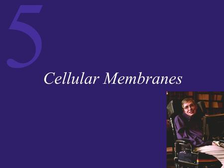 5 Cellular Membranes. 5 Membrane Composition and Structure Cell membranes are bilayered, dynamic structures that:  Perform vital physiological roles.
