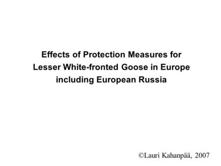 Effects of Protection Measures for Lesser White-fronted Goose in Europe including European Russia ©Lauri Kahanpää, 2007.