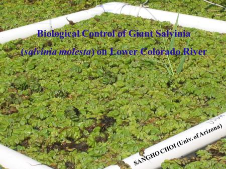 Biological Control of Giant Salvinia (salvinia molesta) on Lower Colorado River SANGHO CHOI (Univ. of Arizona)