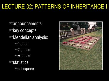 LECTURE 02: PATTERNS OF INHERITANCE I Fannouncements Fkey concepts FMendelian analysis: E1 gene E2 genes E n genes Fstatistics Echi-square.