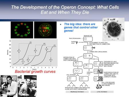 The Development of the Operon Concept: What Cells Eat and When They Die (Berman et al.) The big idea: there are genes that control other genes! Bacterial.