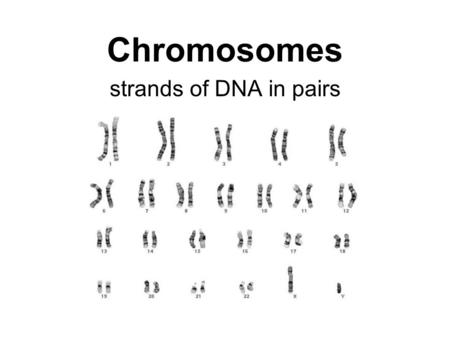 Chromosomes strands of DNA in pairs. Vehicle of trait inheritance. Each chromosome in a pair is from one parent. Each pair = homologous chromosomes. Chromosomes.
