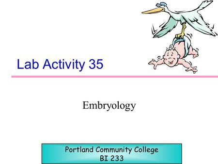 Lab Activity 35 Embryology Portland Community College BI 233.