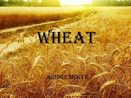 Wheat Bridge McKye. Origins Fertile Crescent –Iraq, Syria, Israel, Jordan and Egypt Originally gathered as a wild grass Stone Age : Rocks used to grind.