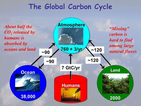 The Global Carbon Cycle Humans Atmosphere 760 + 3/yr Ocean 38,000 Land 2000 ~90 ~120 7 GtC/yr ~90 About half the CO 2 released by humans is absorbed by.