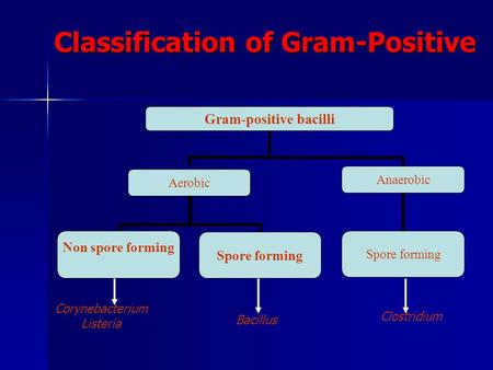 Classification of Gram-Positive