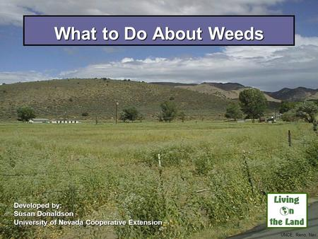 What to Do About Weeds Developed by: Susan Donaldson University of Nevada Cooperative Extension UNCE, Reno, Nev.