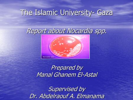 The Islamic University- Gaza Report about Nocardia spp. Prepared by Manal Ghanem El-Astal Supervised by Dr. Abdelraouf A. Elmanama.