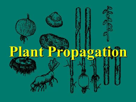 Plant Propagation. Plant propagation... Sexual methods - seed propagation Asexual methods –rooting cuttings –layering; air layering –grafting –specialized.