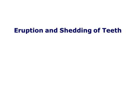 Eruption and Shedding of Teeth. Mixed Dentition: Presence of both dentitions Figure from Ten Cate's Oral Histology, Ed., Antonio Nanci, 6 th edition.