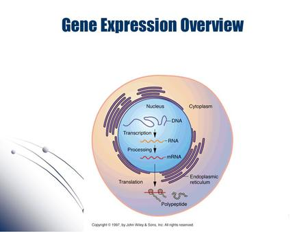 Gene Expression Overview