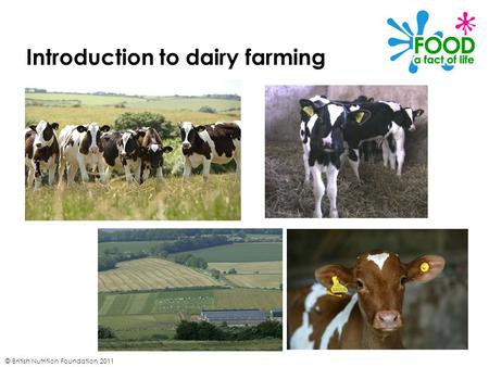 © British Nutrition Foundation 2011 Introduction to dairy farming.