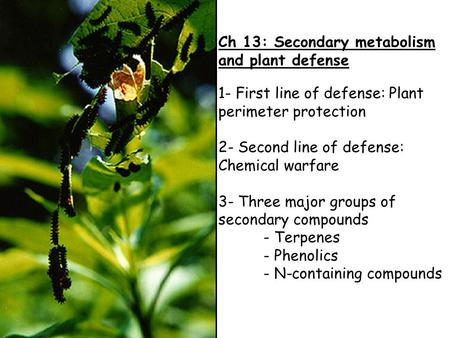 Ch 13: Secondary metabolism and plant defense