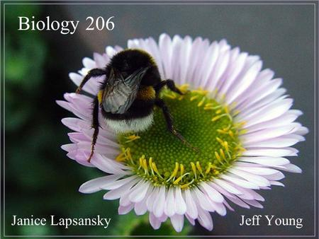 Biology 206 Jeff YoungJanice Lapsansky. Lab Page Jeffs Page Janices Page A Photographic Atlas <strong>for</strong> the Biology Laboratory, Van De Graaff and Crawley.