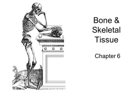 Bone & Skeletal Tissue Chapter 6. Functions of the Skeletal system 1.Support 2.Protection 3.Movement 4.Mineral storage 5.Hematopoiesis (blood cell formation)