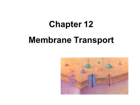 Chapter 12 Membrane Transport. Definitions Solution – mixture of dissolved molecules in a liquid Solute – the substance that is dissolved Solvent – the.