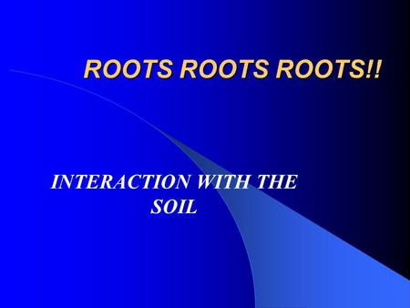 ROOTS ROOTS ROOTS!! INTERACTION WITH THE SOIL. ROOTS A. Roots are the first organ to emerge from a germinated seed B. Root systems 1. Taproot- Single.