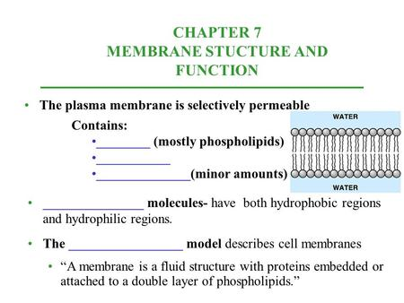 CHAPTER 7 MEMBRANE STUCTURE AND FUNCTION The plasma membrane is selectively permeable Contains: ________ (mostly phospholipids) ___________ ______________(minor.