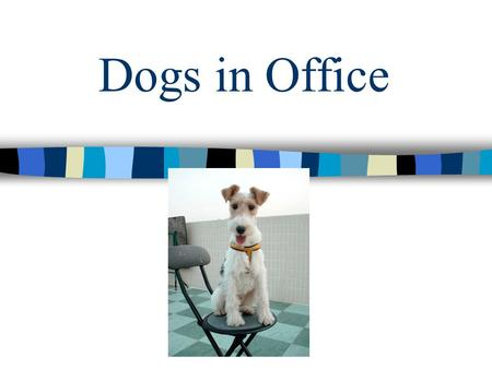 Dogs in Office Why Let The Dogs In? Dogs send stress levels plummeting Dogs in office bring better productivity and encourage teamwork.