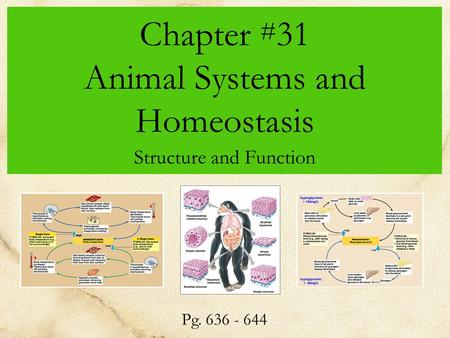 Chapter # 31 Animal Systems and Homeostasis Structure and Function Pg. 636 - 644.