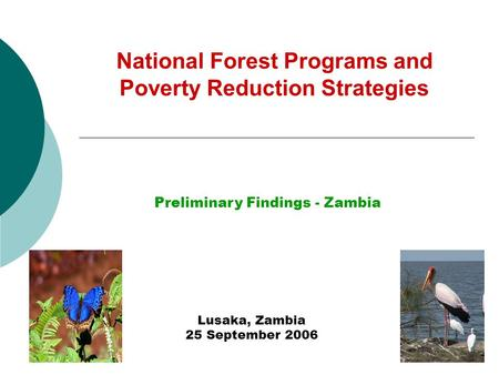 National Forest Programs and Poverty Reduction Strategies Lusaka, Zambia 25 September 2006 Preliminary Findings - Zambia.