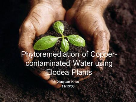 Phytoremediation of Copper- contaminated Water using Elodea Plants Xiaojuan Khoo 11/13/08.