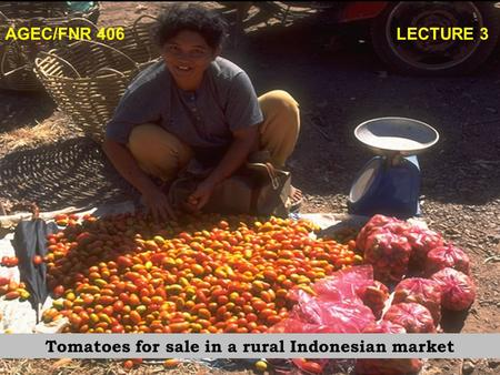 AGEC/FNR 406 LECTURE 3 Tomatoes for sale in a rural Indonesian market.