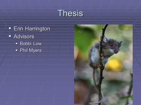 Thesis  Erin Harrington  Advisors  Bobbi Low  Phil Myers.