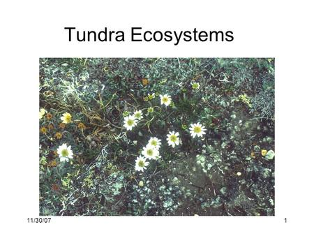 11/30/071 Tundra Ecosystems. 11/30/072 Tundra distribution & origin High latitude (Arctic) and elevation (alpine) Evolved over the last 1.5 million years,