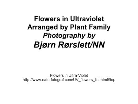 Flowers in Ultraviolet Arranged by Plant Family Photography by Bjørn Rørslett/NN Flowers in Ultra-Violet