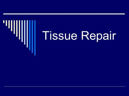 Tissue Repair. Two Types of Repair  Reconstruction with same type cells skin, liver cells  Replacement with simpler cells (scar) connective tissue,