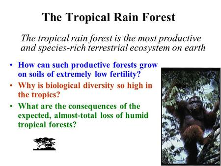 The Tropical Rain Forest How can such productive forests grow on soils of extremely low fertility? Why is biological diversity so high in the tropics?