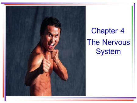 Chapter 4 The Nervous System. Organization of the nervous system Anatomical organization: –Central nervous system –Peripheral nervous system Functional.