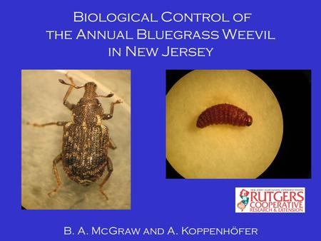 Biological Control of the Annual Bluegrass Weevil in New Jersey B. A. McGraw and A. Koppenhöfer.