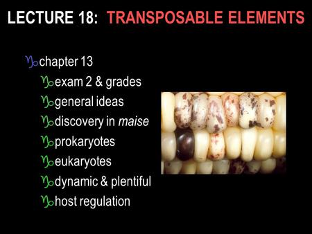 LECTURE 18: TRANSPOSABLE ELEMENTS gchapter 13 gexam 2 & grades ggeneral ideas gdiscovery in maise gprokaryotes geukaryotes gdynamic & plentiful ghost regulation.