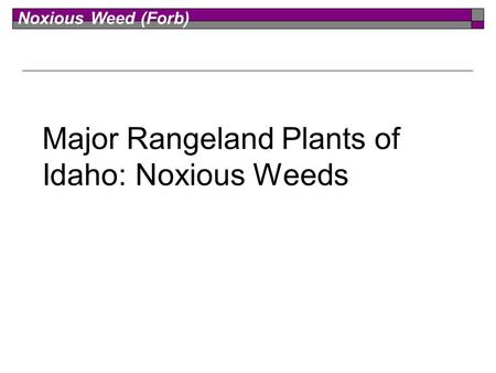 Noxious Weed (Forb) Major Rangeland Plants of Idaho: Noxious Weeds.