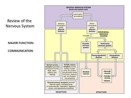 Review of the Nervous System MAJOR FUNCTION: COMMUNICATION.