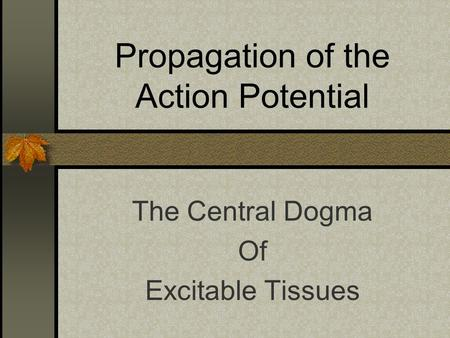 Propagation of the Action Potential The Central Dogma Of Excitable Tissues.