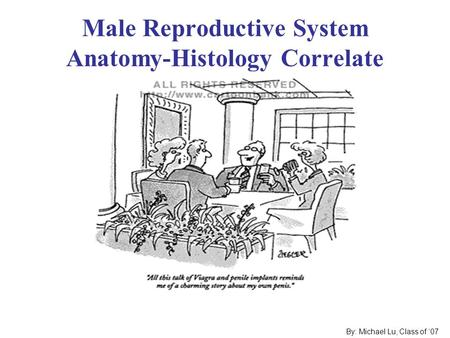 Male Reproductive System Anatomy-Histology Correlate By: Michael Lu, Class of '07.