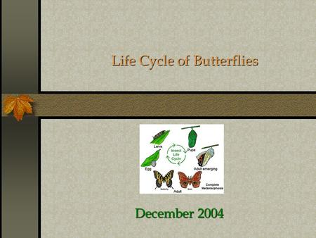 Life Cycle of Butterflies December 2004 Butterfly  Stage 1 – The Egg  Stage 2 – The Caterpillar 2 nd -3 rd Week  Stage 3 – The Chrysalis 4 th -7 th.