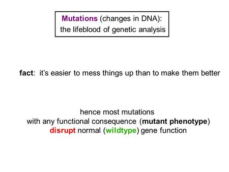 Mutations (changes in DNA): the lifeblood of genetic analysis hence most mutations with any functional consequence (mutant phenotype) disrupt normal (wildtype)