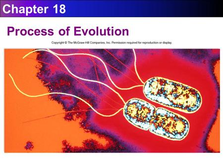 Chapter 18 Process of Evolution.