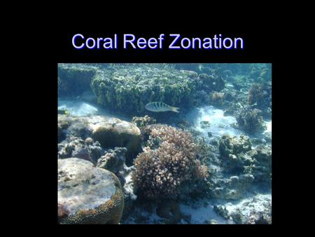 Coral Reef Zonation. Disclaimer The terms used to identify different reef zones are not based upon a uniform agreement among reef scientists. There are.