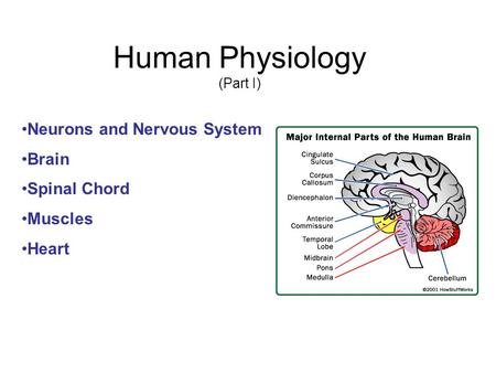 human physiology an integrated approach pdf free download