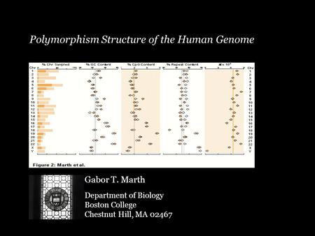 Polymorphism Structure of the Human Genome Gabor T. Marth Department of Biology Boston College Chestnut Hill, MA 02467.