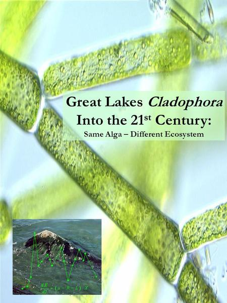 Great Lakes Cladophora Into the 21 st Century: Same Alga – Different Ecosystem.