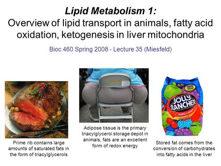 Lipid Metabolism 1: Overview of lipid transport in animals, fatty acid oxidation, ketogenesis in liver mitochondria Bioc 460 Spring 2008 - Lecture 35 (Miesfeld)