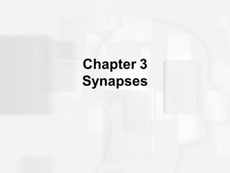 Chapter 3 Synapses.