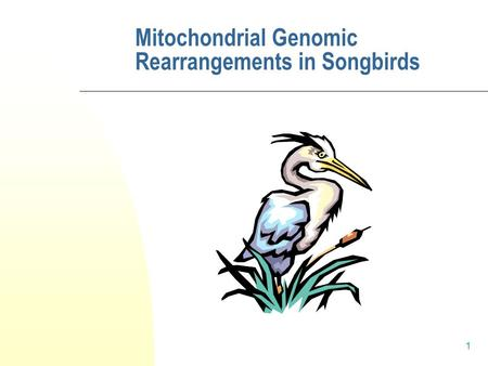 1 Mitochondrial Genomic Rearrangements in Songbirds.