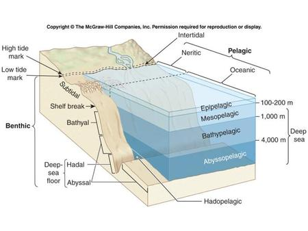 Figure 10.22. Subtidal Zone The part of the continental shelf that is always covered by water –from the low tide mark to the shelf break (150m or 490.